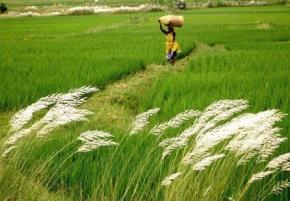 India's Green Revolution 2.0 : Focus on EasternRegion