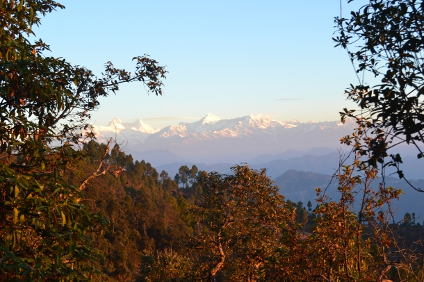 A touch of golden - Pithoragarh, Uttarakhand