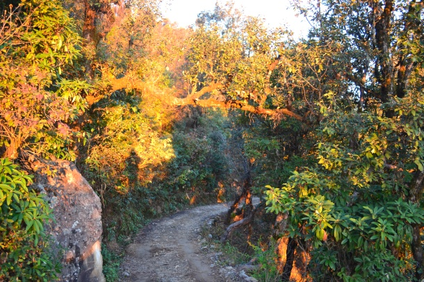 The mysterious path becomes so clear once sun baths it in its glory - Pithoragarh, Uttarakhand