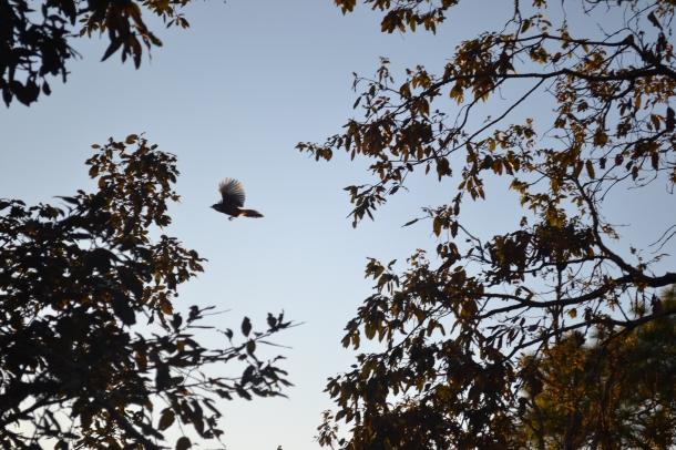 Fly like a bird (Nikon DSLR D3100), Pithoragarh, Uttarakhand