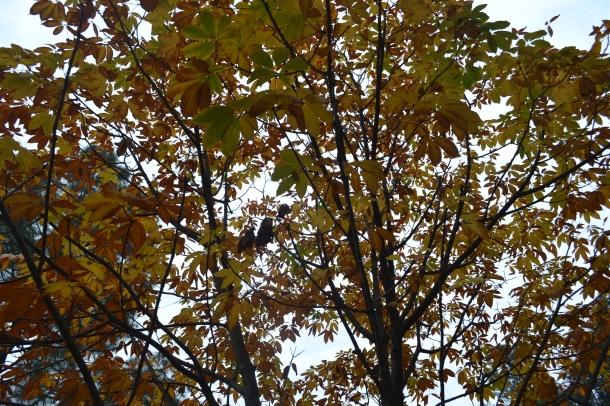 Autumn Tree in Uttarakhand (Nikon DSLR D3100), Pithoragarh, Uttarakhand