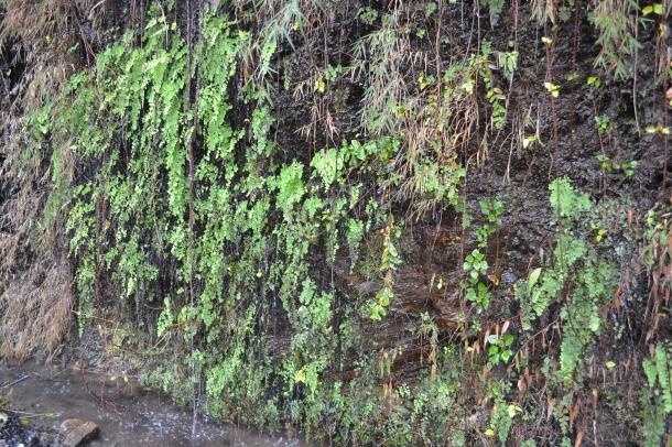 Natural Mineral Water (Nikon DSLR D3100), Pithoragarh, Uttarakhand