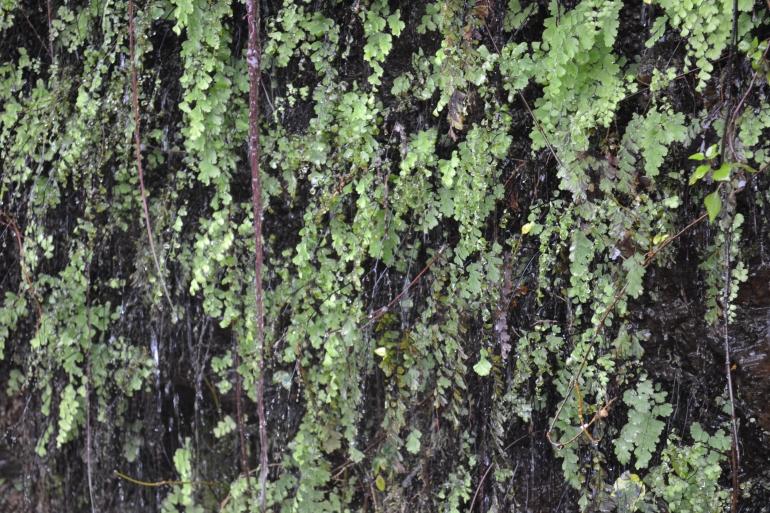 Drops of Life (Nikon DSLR D3100), Pithoragarh, Uttarakhand