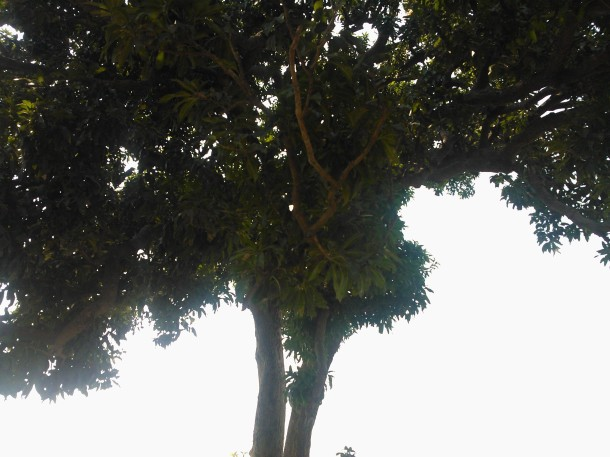 Under the cool shadow of a tree near Jaunpur