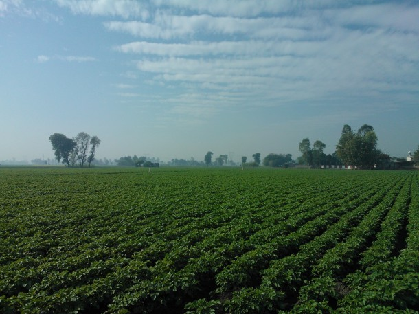 Aloo hi Aloo, Potato farm