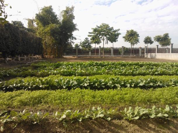 Organic farm...