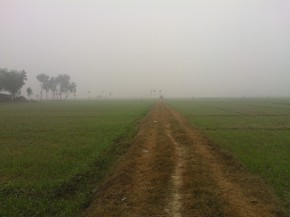 Indian Agriculture and Tractor Industry Update: January 2013