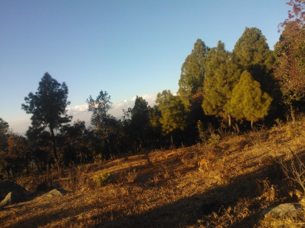 Pine and Oak forest at Dusk, Jhaltola, Pithoragarh, Uttarakhand