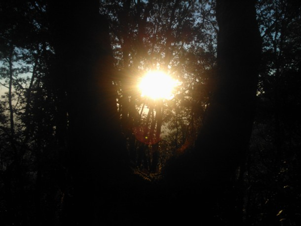 Sun peaking through a tree, Jhaltola, Pithoragarh, Uttarakhand