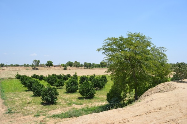 Fruit Garden in the Desert - Sri Ganganagar - Vision of Maharaja Ganga Singh