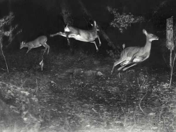 July 1906 : National Geographic featured its first ever wildlife photographs