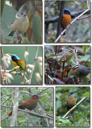 Eaglesnest, Arunachal Pradesh