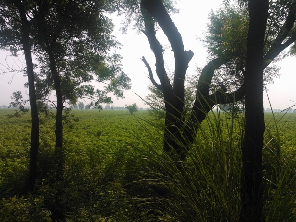 The green beauty of Punjab