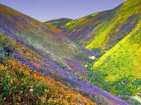 #Indian Natural Wildlife Habitat : Its a Catch-22 (Part 5) Valley of Flowers and Dachigam National Park