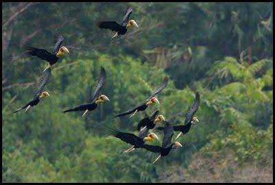 Wildlife Eaglenest, Arunachal Pradesh