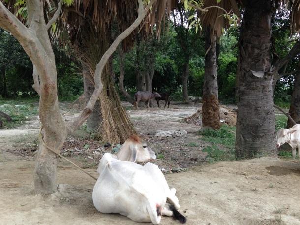 Rural Bihar - Resting time