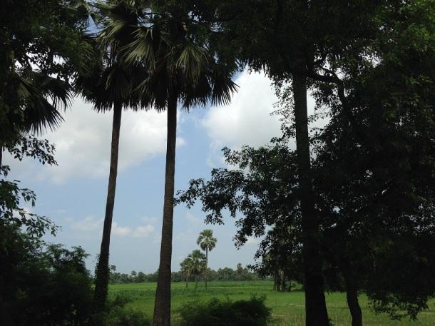Rural Bihar