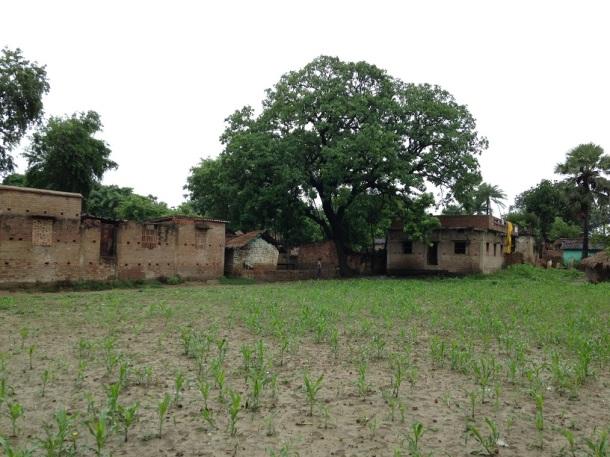 Rural Bihar3