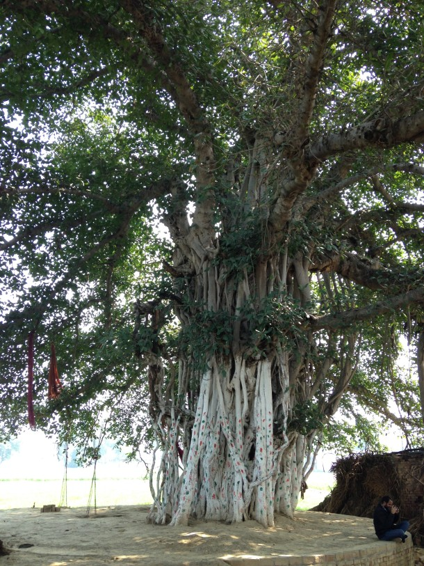The tree of Life: Never lose the connection with your roots, no matter how tall you may become...
